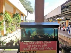 fishes at the train station