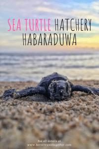 sea turtle hatchery better travel together