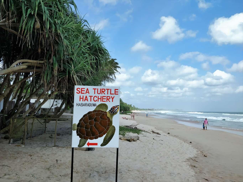 sea turtle hatchery habaraduwa