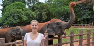 Katrijn with the elephants in Pinawala