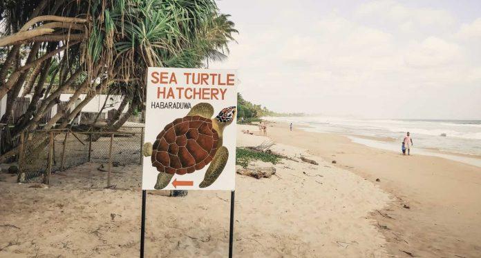 Sea turtle hatchery, Sri Lanka